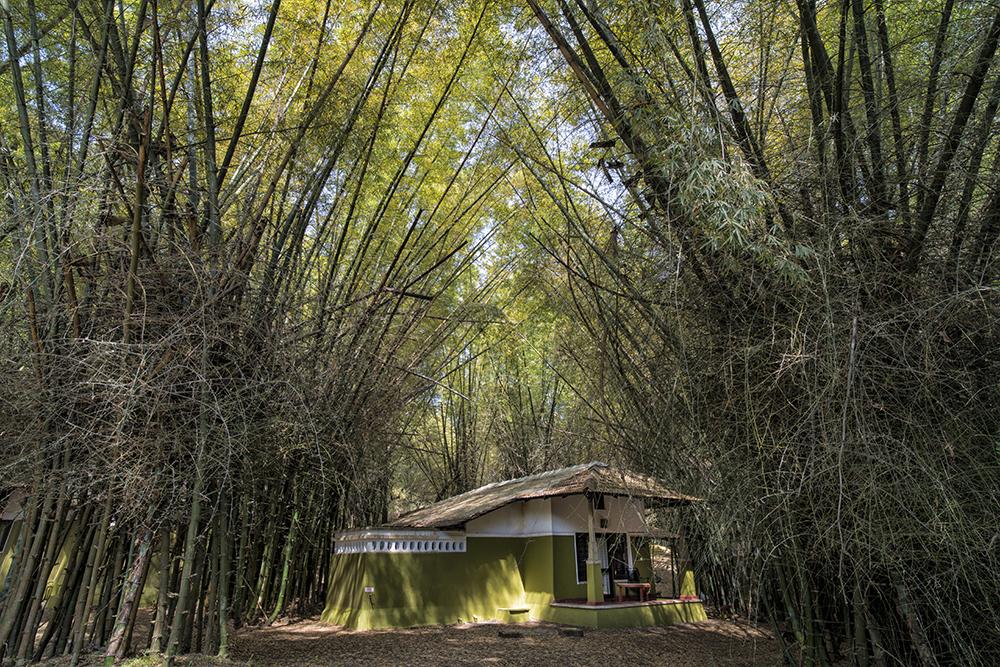 Casa Deep Woods - Masinagudi